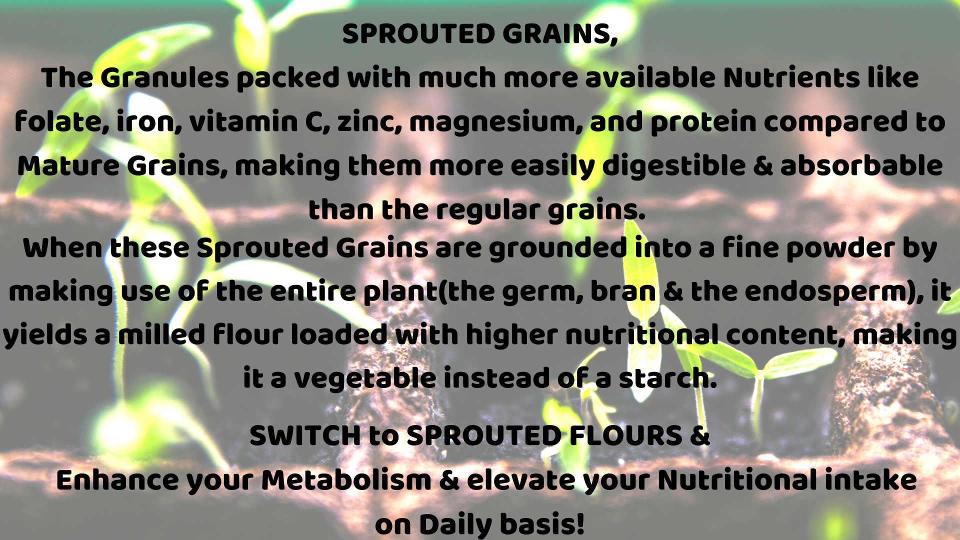 Read more about the article Sprouted Flours | Loaded with an ample of Nutrients & Vitamins!